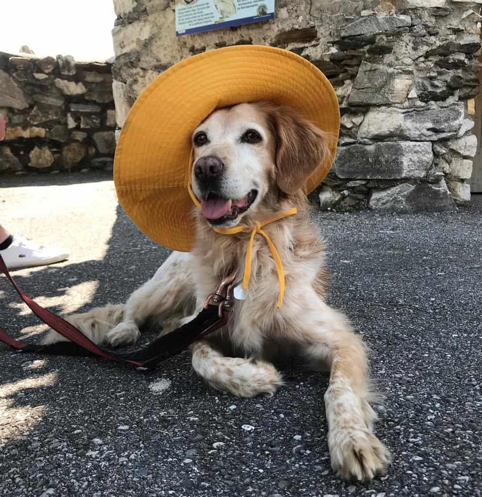 Kärnten Ausflugsziel mit Hund Adlerarena Burg Landskron bei Villach am Ossiacher See