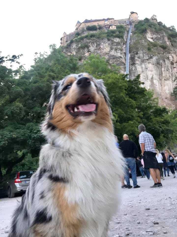 Hund vor der Burg Hochosterwitz in Kärnten