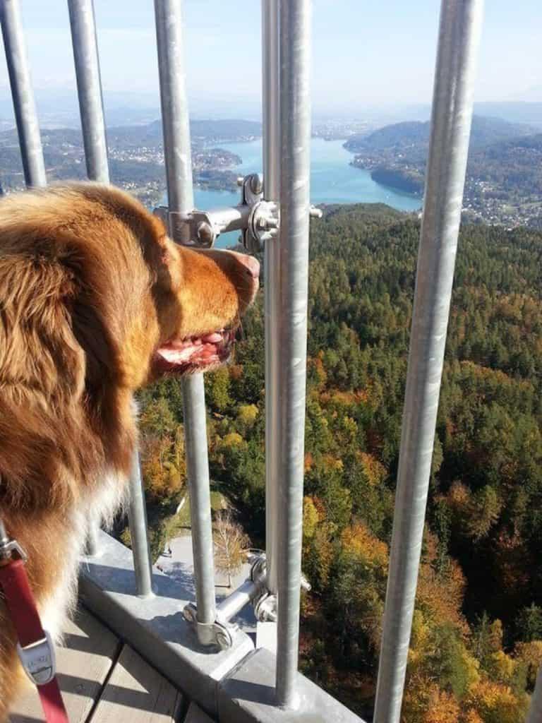Ausflug mit Hund auf Pyramidenkogel in Kärnten - Österreich