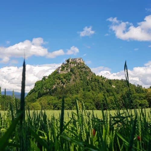 Burg Hochosterwitz auf Fels mit Getreideacker und blühendem Klee im Vordergrund. Ausflugsziel für Familien in Kärnten, Österreich