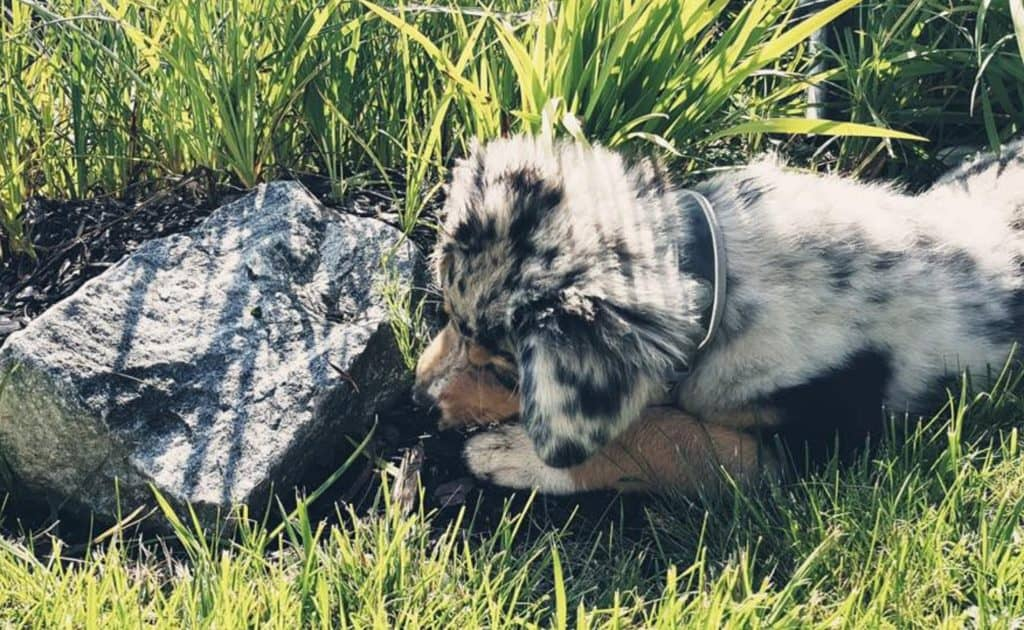 Hund auf Turracher Höhe Kindererlebniswelt Nockys Almzeit