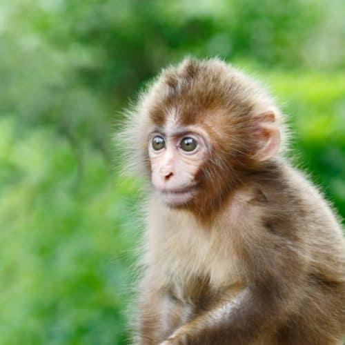 Kleines Äffchen vom Affenberg in Landskron - Ausflugstipp für Familien mit Kindern in Kärnten