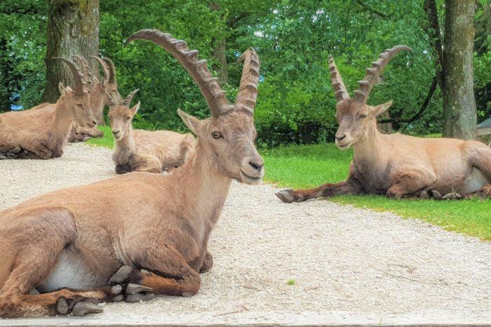 Seit März geöffnet: Tierpark Rosegg Nähe Velden am Wörthersee