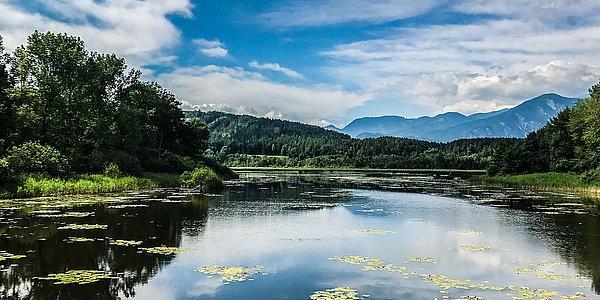 Ausflugsziele Klopeinersee Slabatnigmoor bei Führung oder Aktivitäten in Kärnten. Naturschutzgebiet in Österreich.