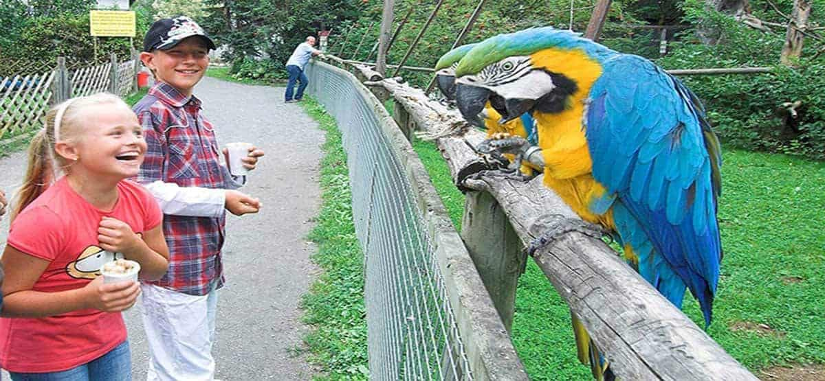 Kärnten mit Kindern im Vogelpark Turnersee mit Papageien bei Ausflug in der Region Klopeinersee in Österreich