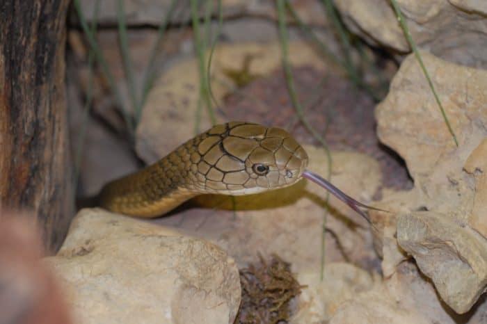 Kobra, Leguan oder Vogelspinne? Tier-Patenschaften im Reptilienzoo Happ