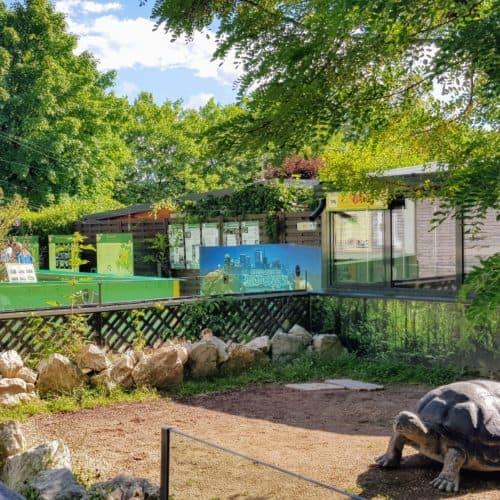 Riesenschildkröte Reptilienzoo Happ - Kärnten