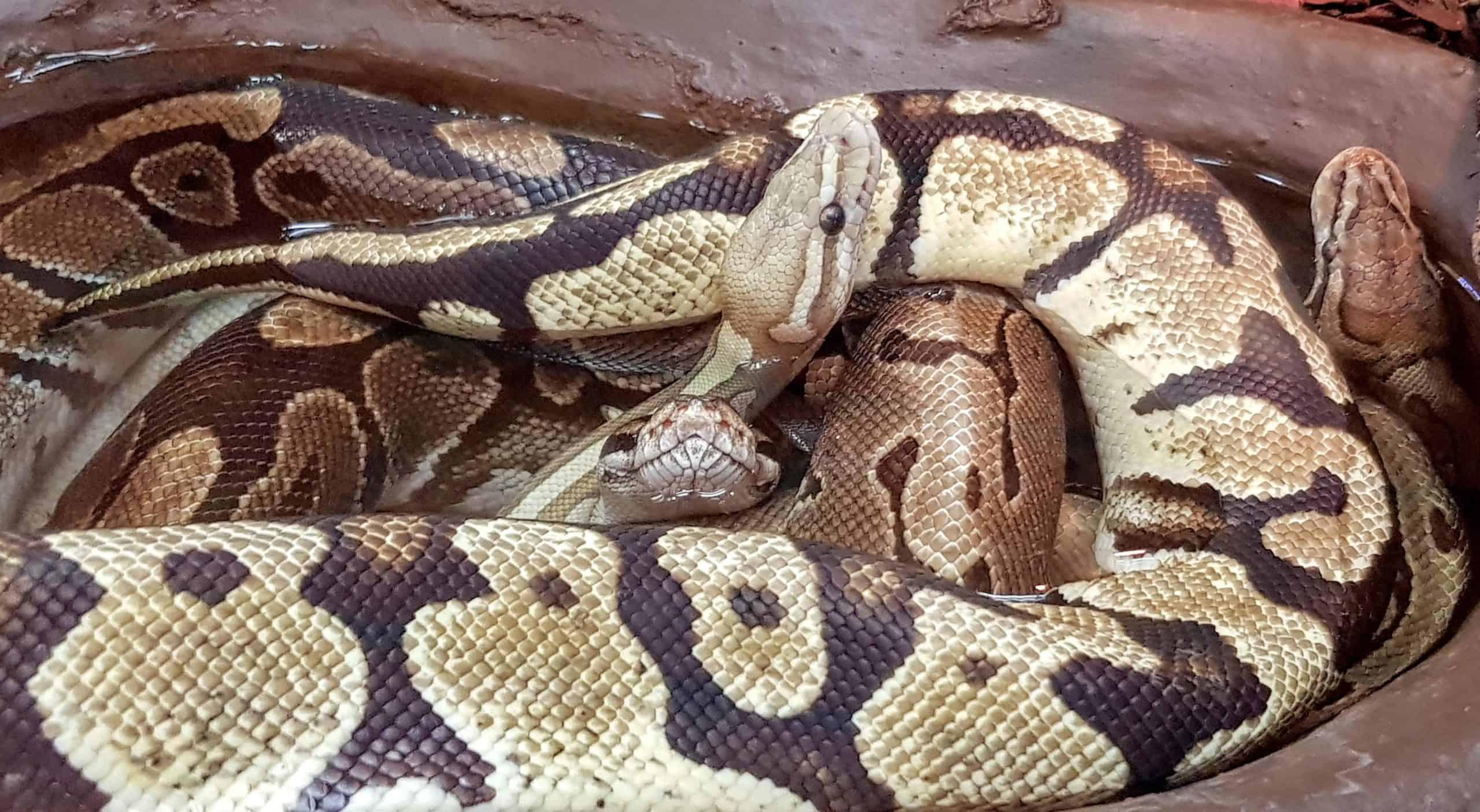 Schlangen im Wasserbecken - Reptilienzoo Happ Klagenfurt, Österreich