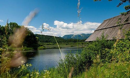 Ausflug und Wanderung zum Slabatnigmoor in der Ferienregion Klopeinersee in Kärnten. Naturschutzgebiet in Österreich.