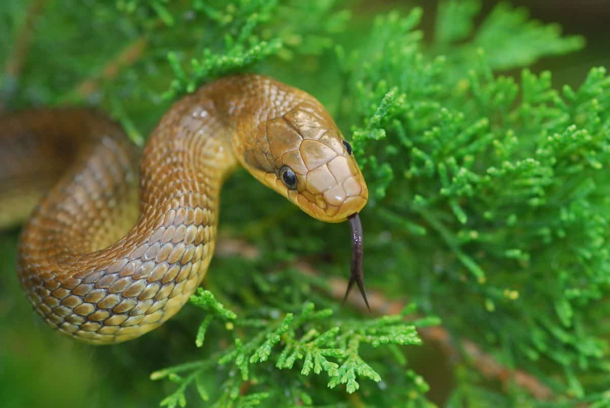 Schlange für Reptilien-Patenschaften im Reptilienzoo Happ in Kärnten