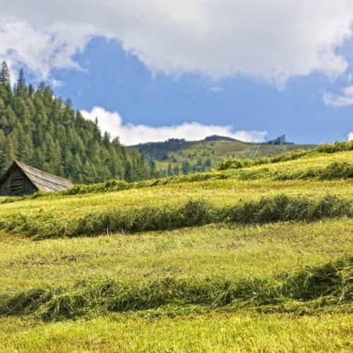 Landschaft in Bad Kleinkirchheim mit Kaiserburg im Hintergrund bei Wanderung. Aktivität bei Österreich-Urlaub in Kärnten.