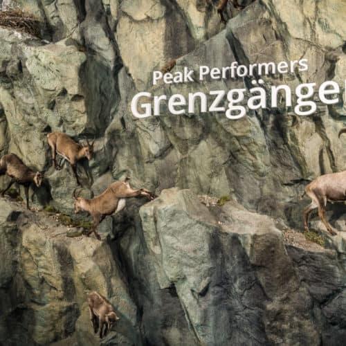 Steinböcke im Nationalpark Hohe Tauern Kärnten im Haus der Steinböcke - Erlebniswelt in Heiligenblut - Winterausflugsziele in Österreich