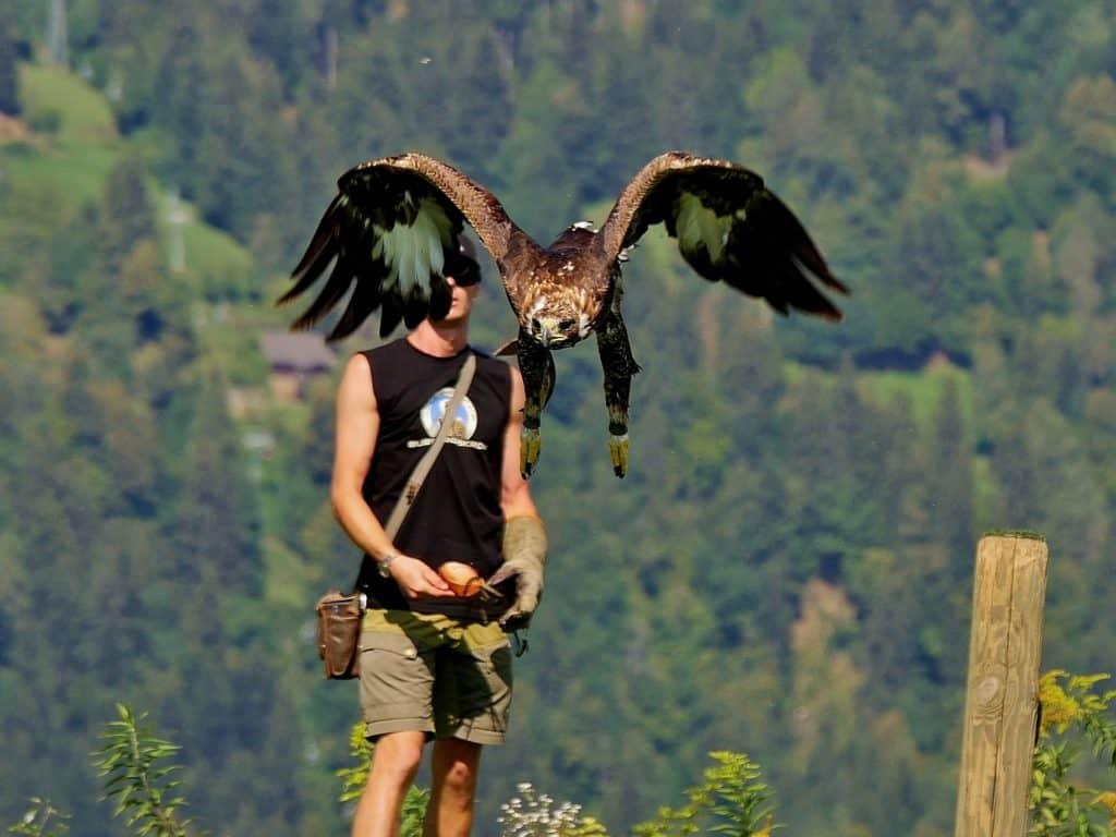Flugschau auf Burg Landkron bei Affenberg - Adlerarena Kärnten
