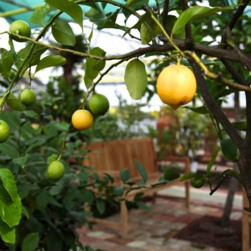 Ausflugstipp Zitrusgarten am Faaker See - ganzjährig geöffnet