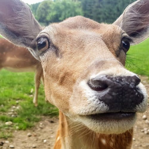 Wild - Tierpark in Kärnten geöffnet in Rosegg