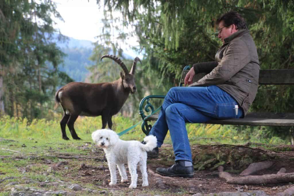 Mit Hund im Tierpark Rosegg - Ausflugsziel in Kärnten Nähe Wörthersee
