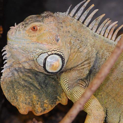 Reptil im Reptilienzoo Happ am Wörthersee - ganzjährig geöffnete Sehenswürdigkeit in Österreich