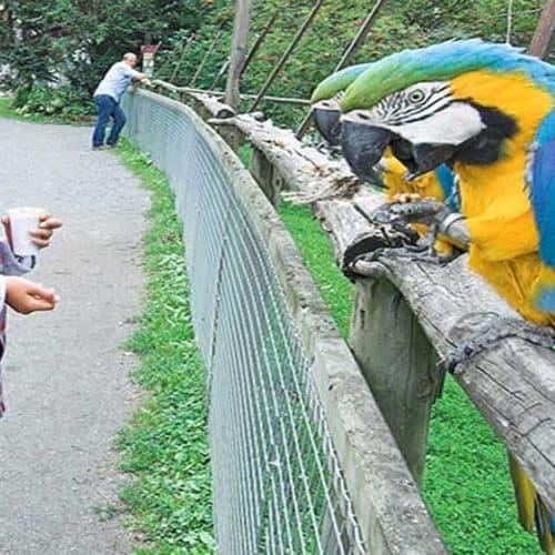 Kinder im Vogelpark Turnersee - geöffnetes Ausflugsziel in Kärnten