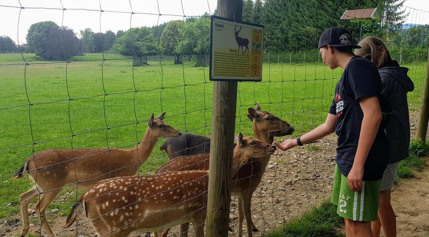 Tierpark Rosegg in Kärnten - Sehenswürdigkeit im Rosental
