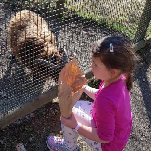 Streichelzoo Tierpark Rosegg in Kärnten - Mädchen füttert Ziege im Kleintierzoo