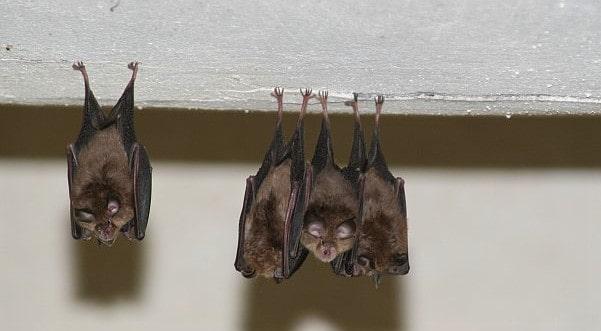 Fledermäuse im 1. Österreichischen Fledermaushaus in Kärnten