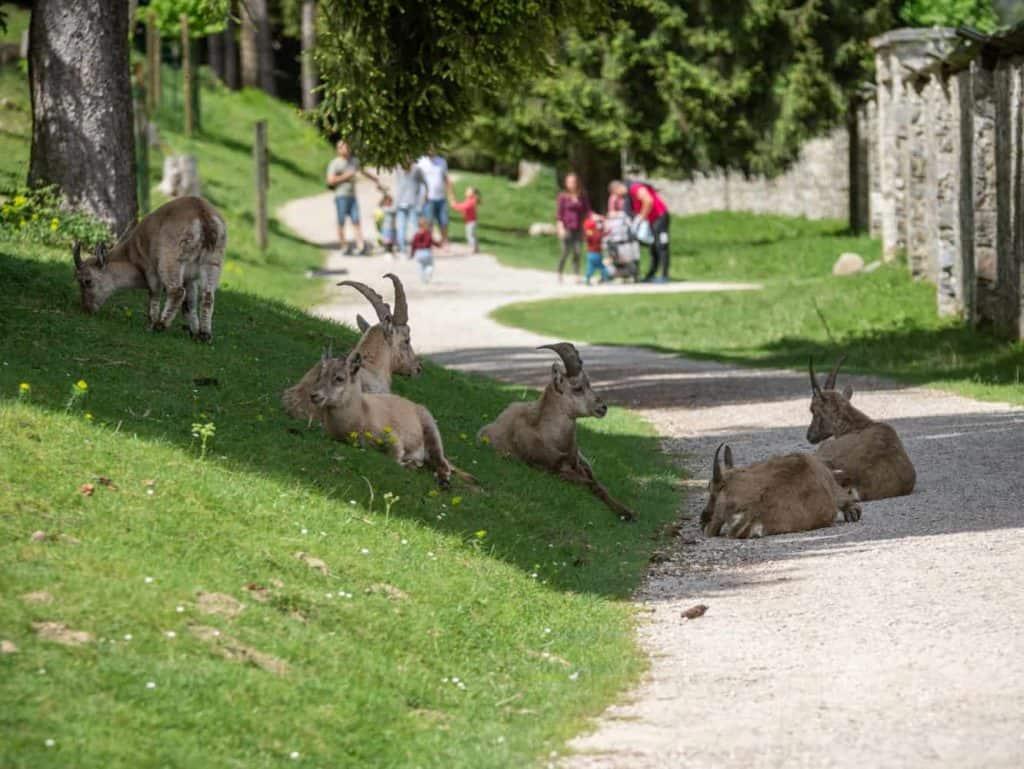 Ausflug in Tierpark Nähe Weissensee Nassfeld in Rosegg