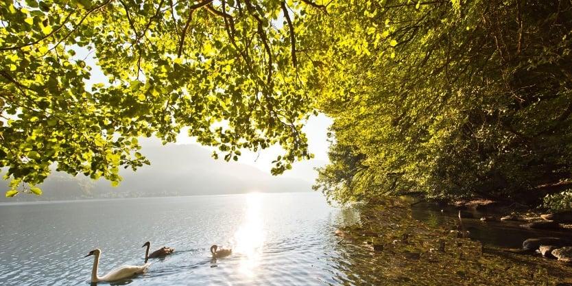 Slow Trail Wanderweg am Südufer Millstätter See in Kärnten