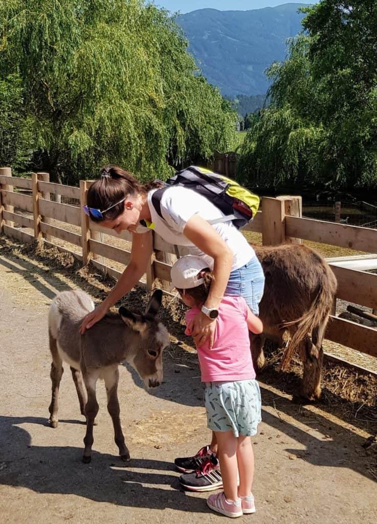 Mit Kindern im Eselpark Maltatal in Kärnten