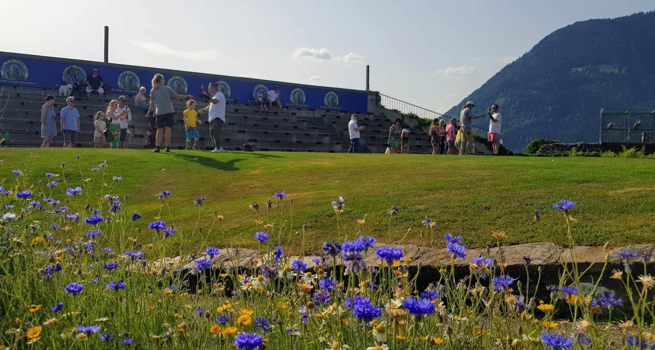 Adlerarena Burg Landskron im Sommer nach der Greifvogelschau
