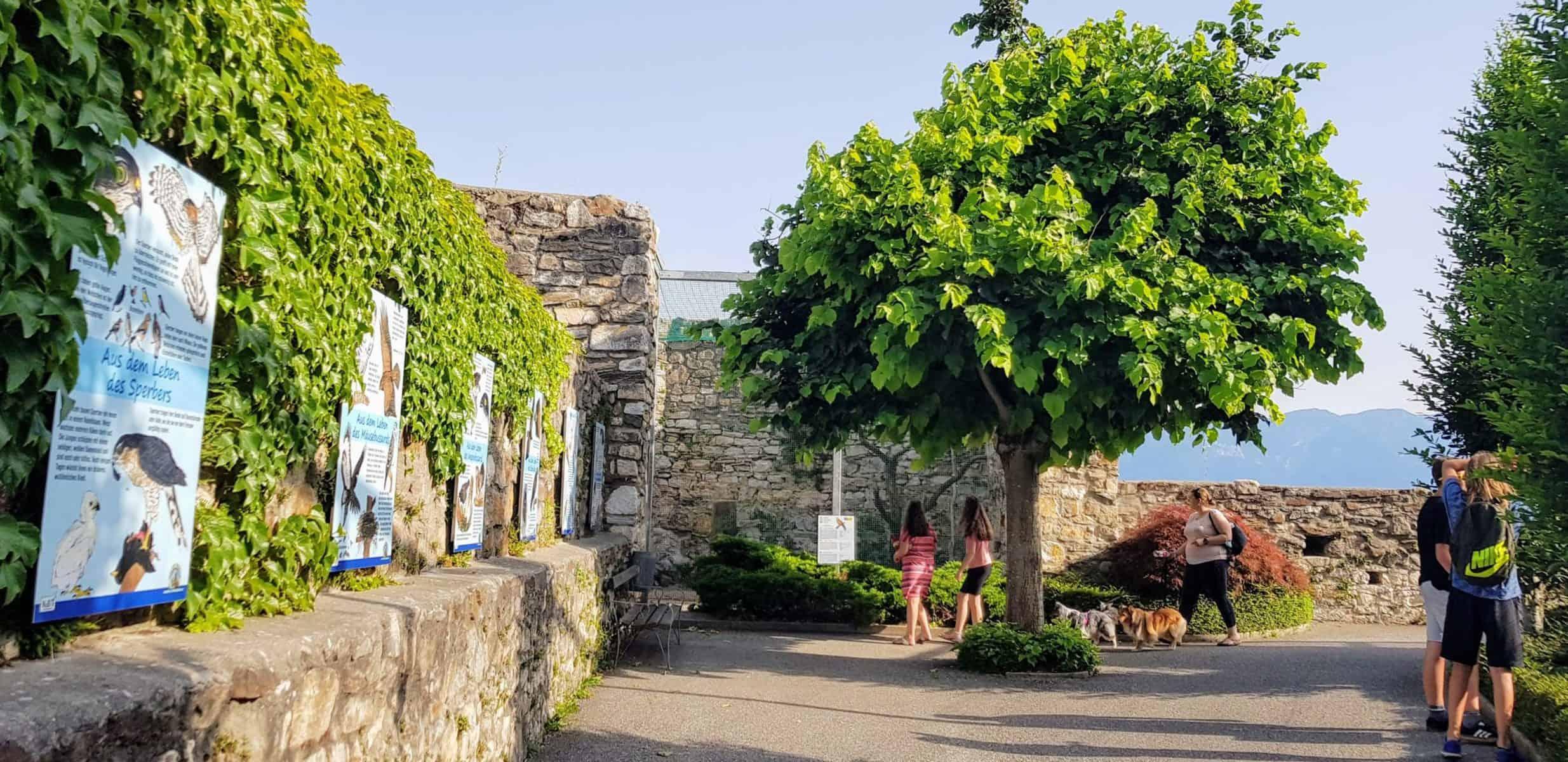 Greifvogelpark & Zoo Adlerarena Burg Landskron im Sommer