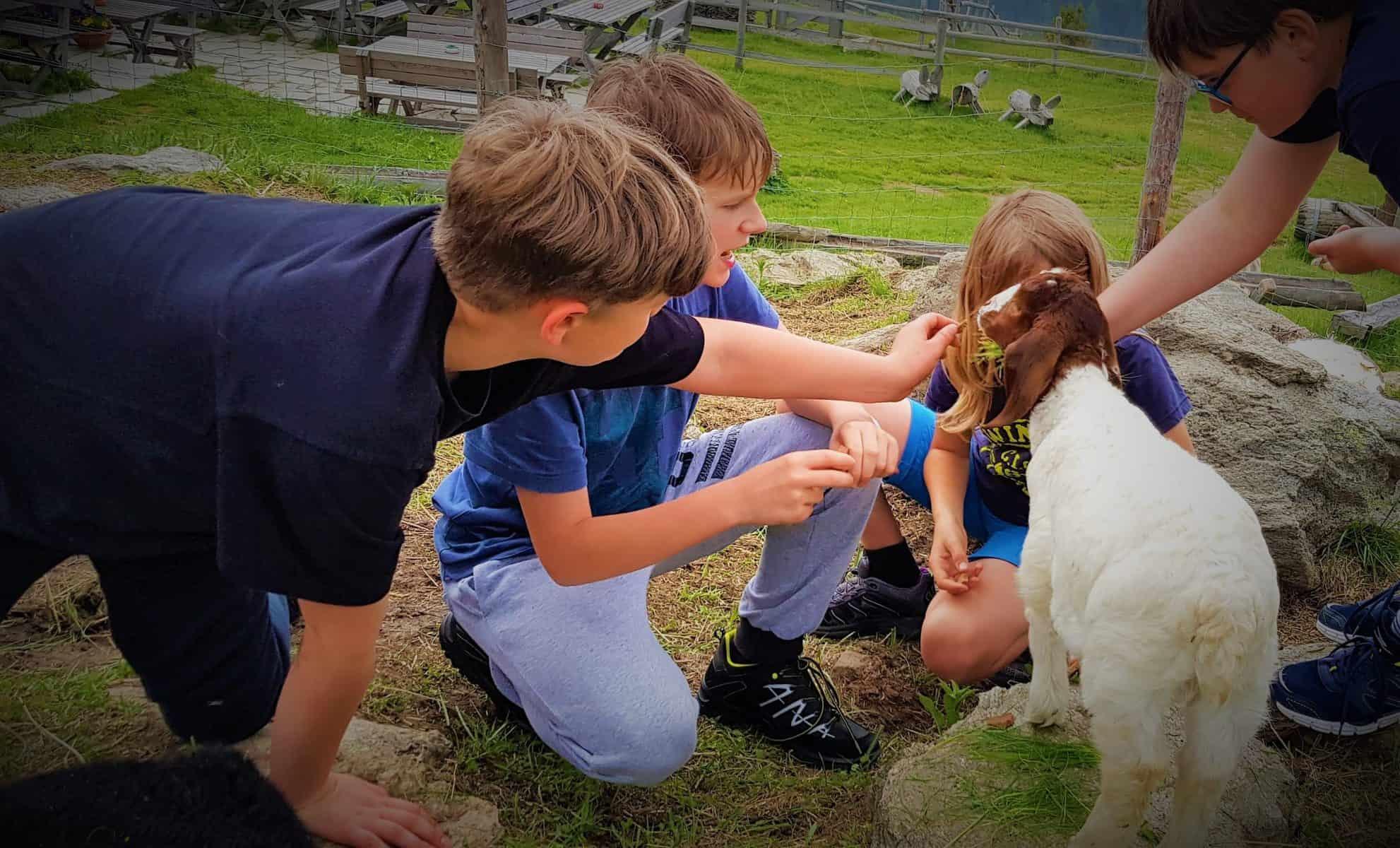 Kinder mit Ziege bei Familienwanderung auf eine Hütte am Millstätter See in Kärnten
